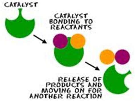 Gcse biology enzyme coursework