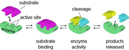 Gcse biology coursework hydrogen - admanlinecom